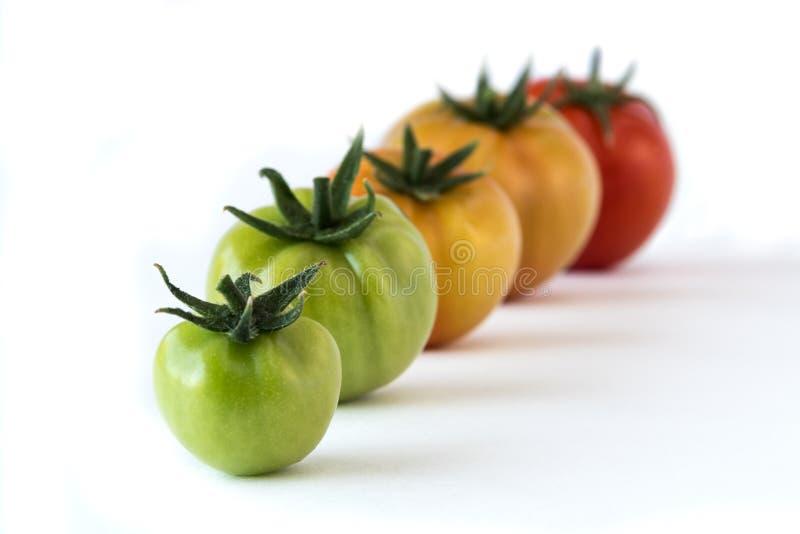 Tomato growing up showing progress set isolated on white background. Health Concept royalty free stock image