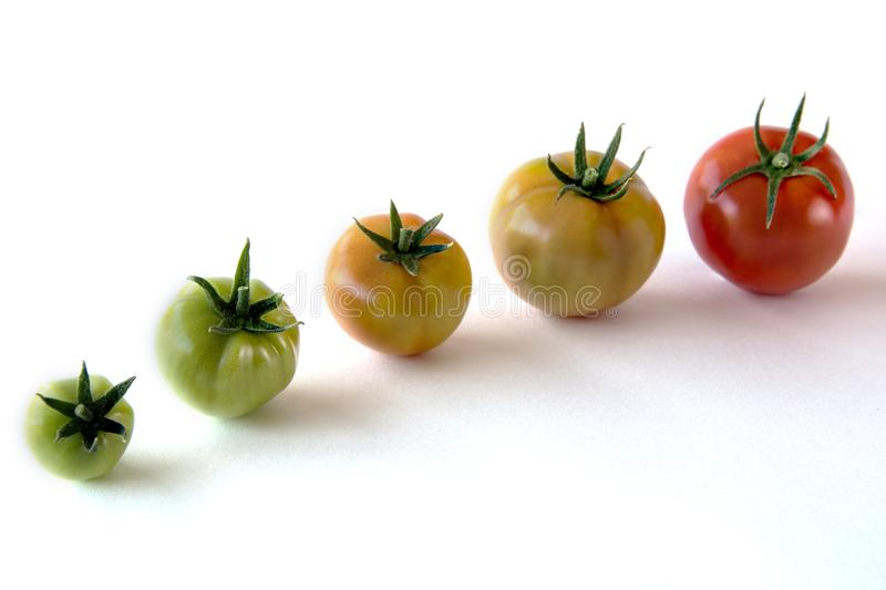 Tomato growing up showing progress set isolated on white background. Health Concept royalty free stock photography