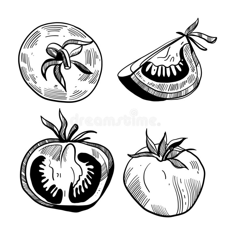 Tomato hand drawn vector illustration set. Isolated tomato and sliced piece. Farm market product. Isolated on white background stock illustration