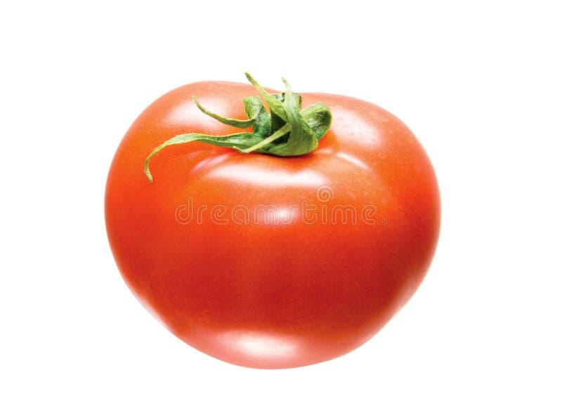 Tomato isolated royalty free stock photos