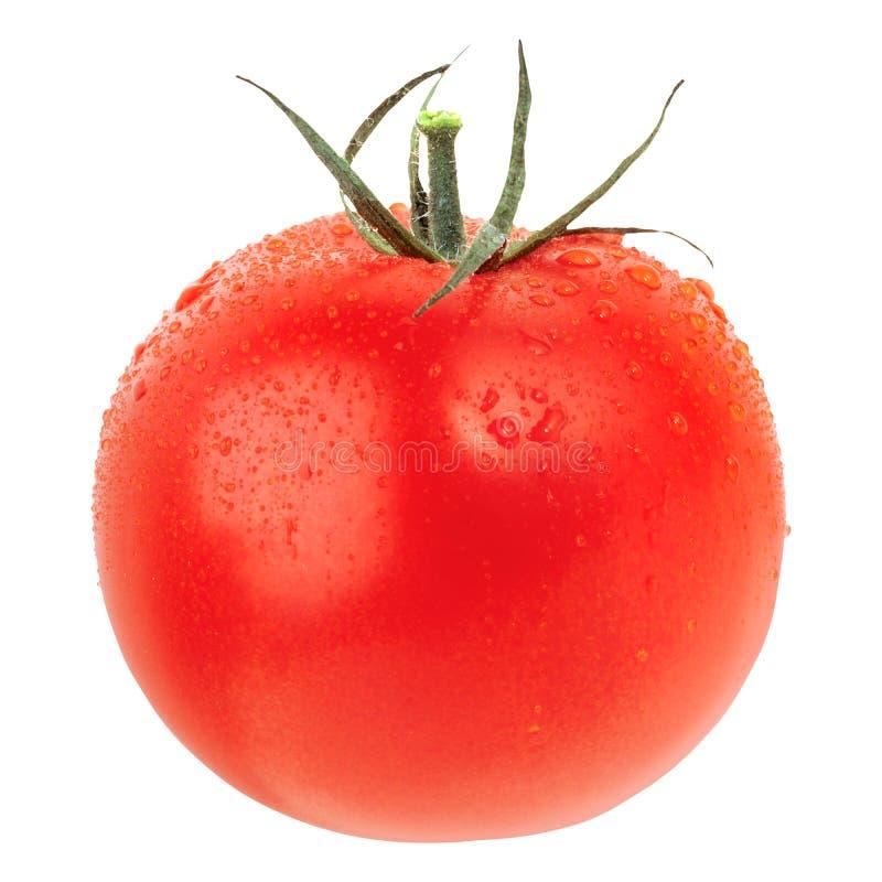 Free Tomato Isolated On White Royalty Free Stock Photos - 137009868