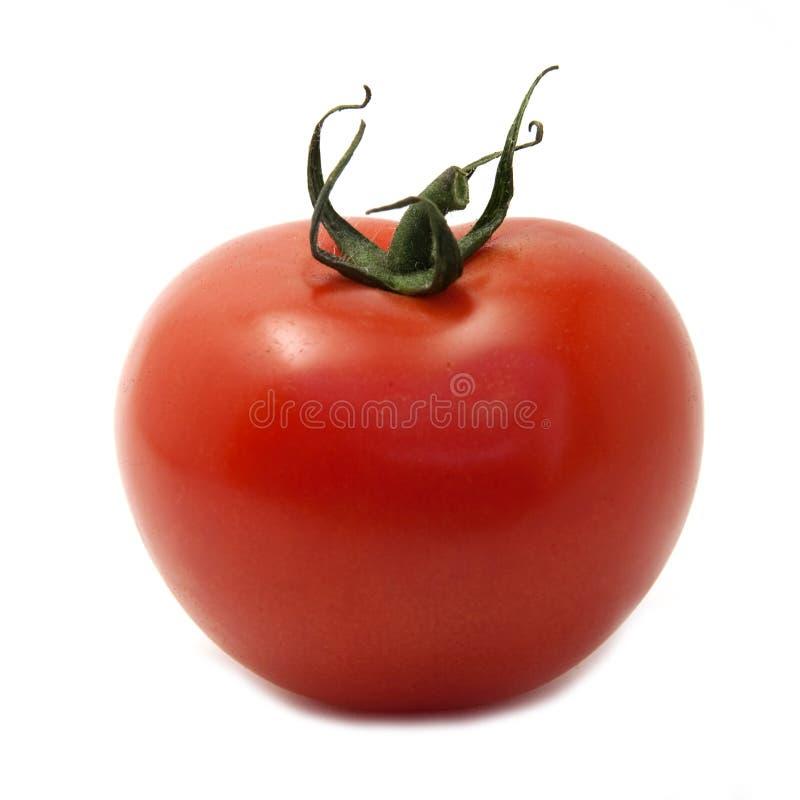 Free Tomato Isolated On White Stock Photography - 14418442