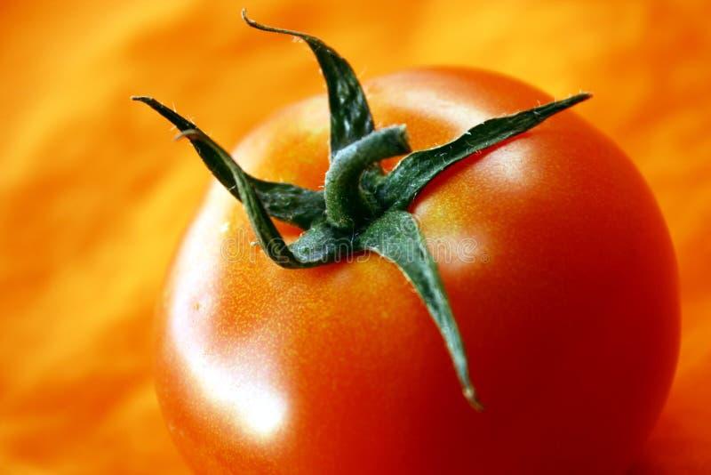 Tomato on orange background royalty free stock image