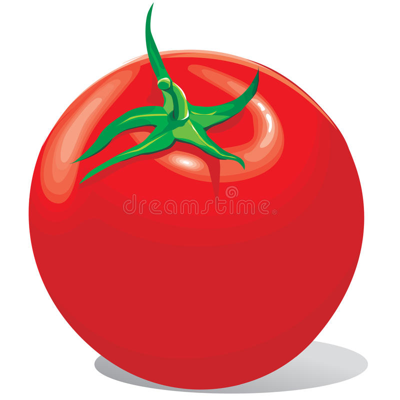 Tomato Red With A Green Tail Stock Images