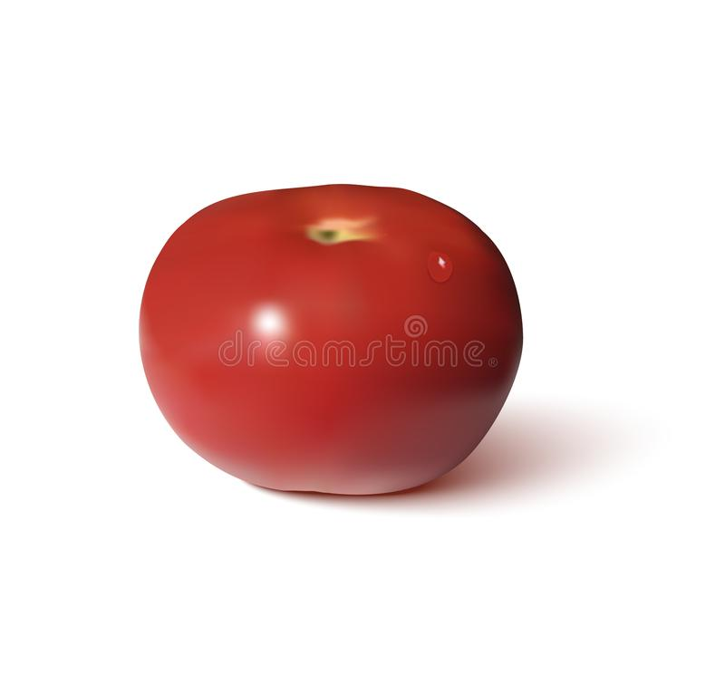 Tomato red realistic. Vegetables vector illustration on white background royalty free illustration