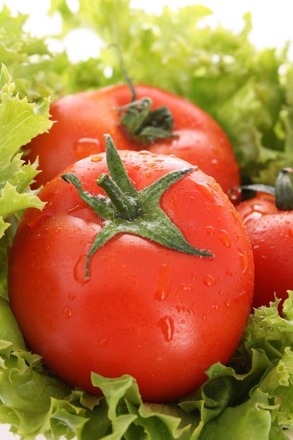 Tomato and salad royalty free stock photo