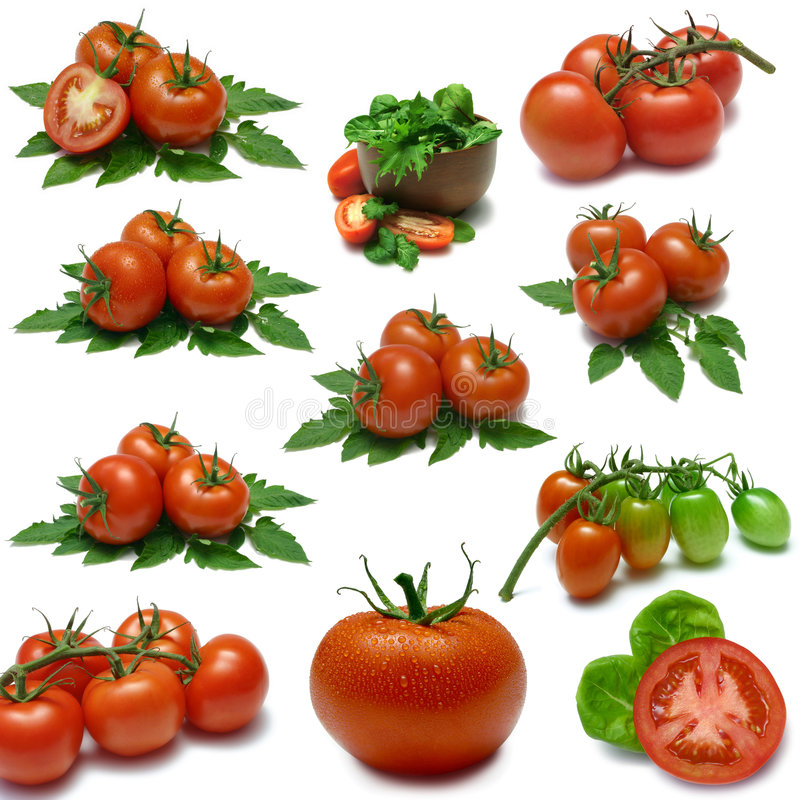 Tomato Sampler stock photography
