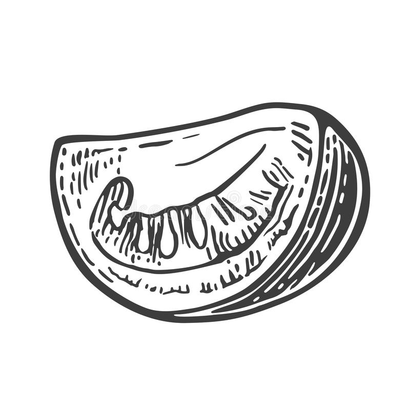 Tomato slice. Vector engraved illustration isolated on white background.  royalty free illustration