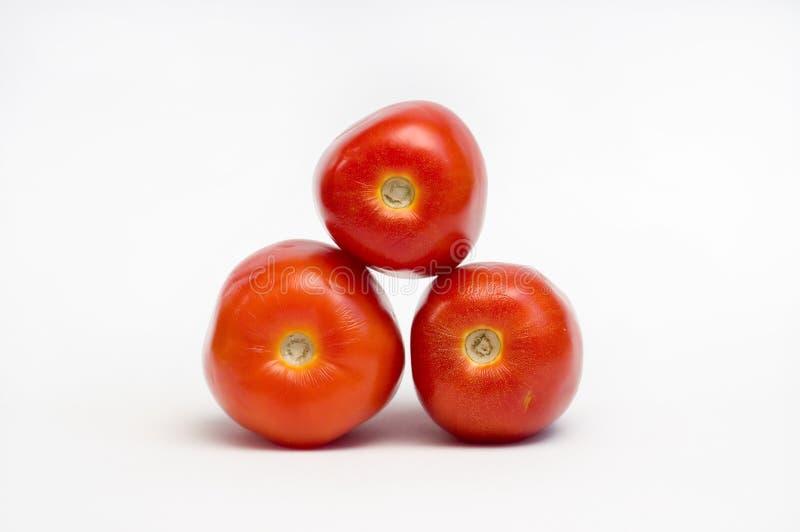 Tomato Solanum lycopersicum royalty free stock photos