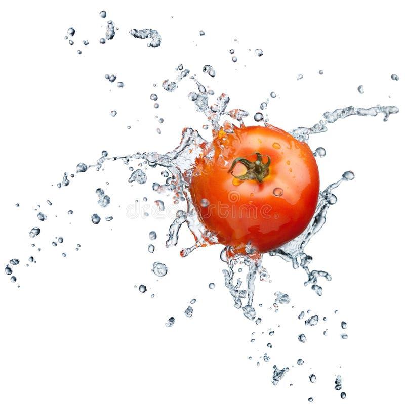 Download Tomato splashing in water stock photo. Image of whole - 15529472