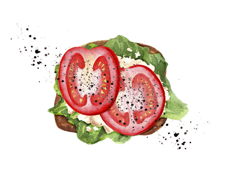 Tomato toast with white cheese, lettuce and black pepper vector illustration