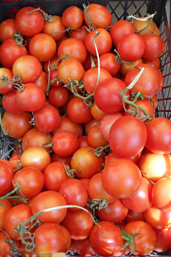 Tomato. Tomatoes. Organic fruits. Salad stock photo