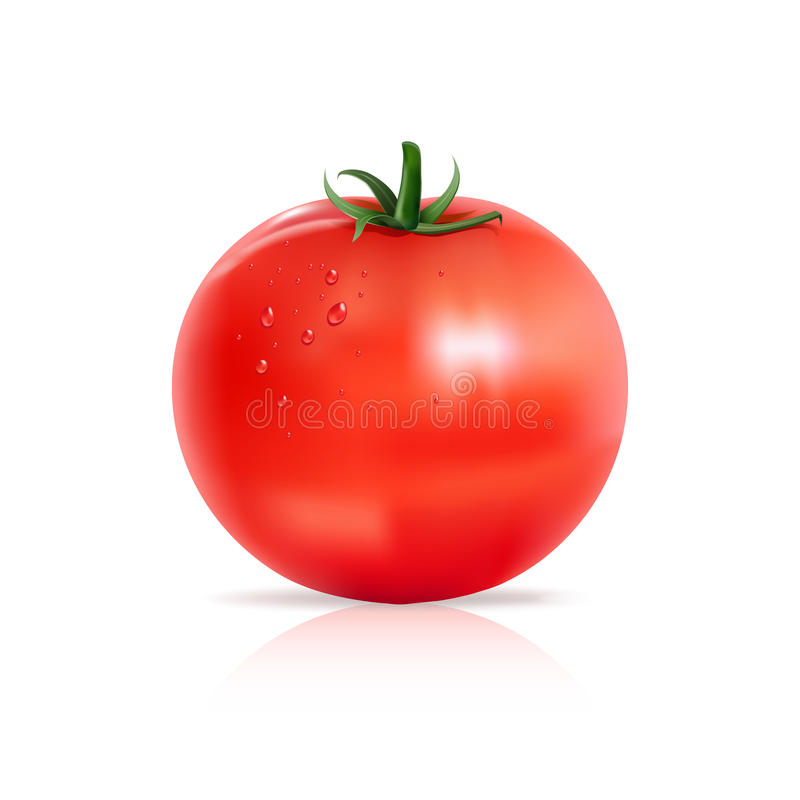 Tomato with water drops. royalty free illustration