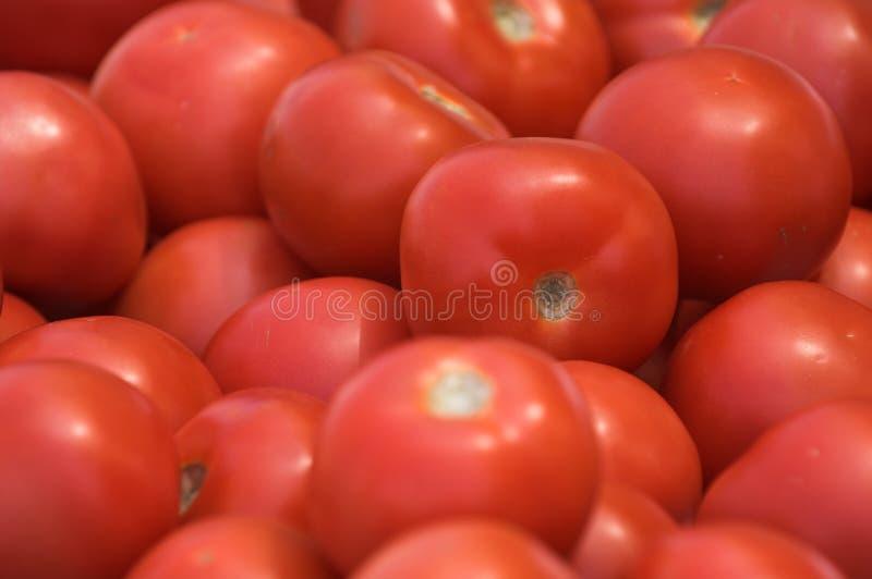 tomatoe zdjęcia stock