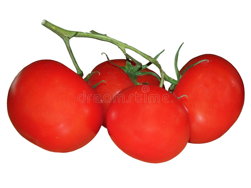 tomatoe obraz royalty free