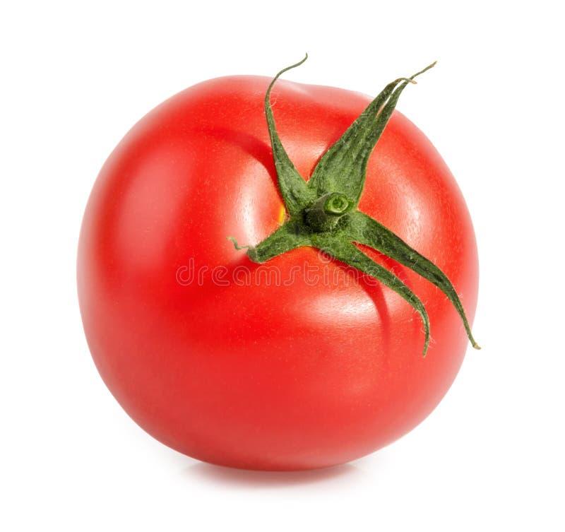 Tomatoe auf Weiß lizenzfreie stockbilder