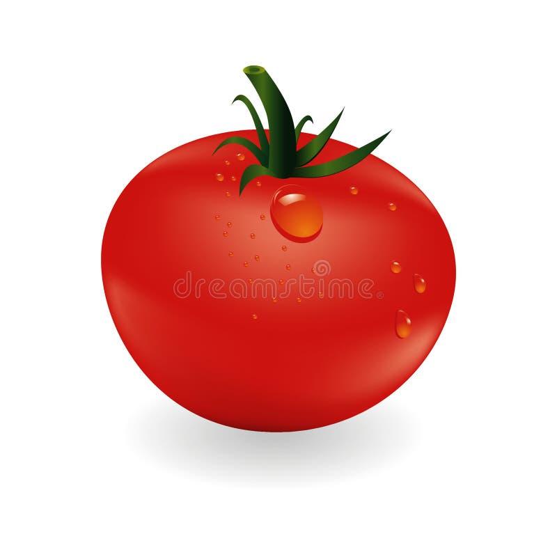 Tomatoe and drops royalty free illustration