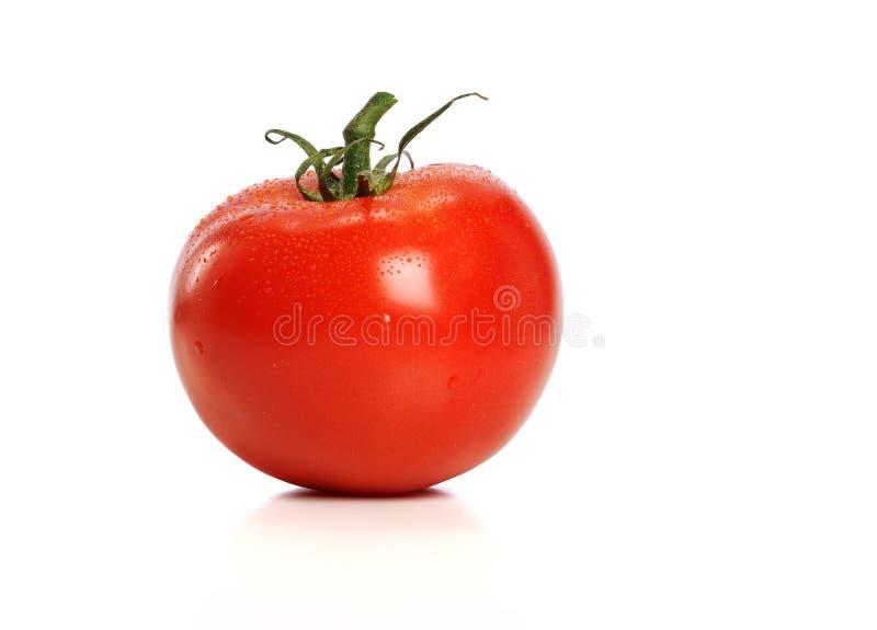 Tomatoe vermelho foto de stock