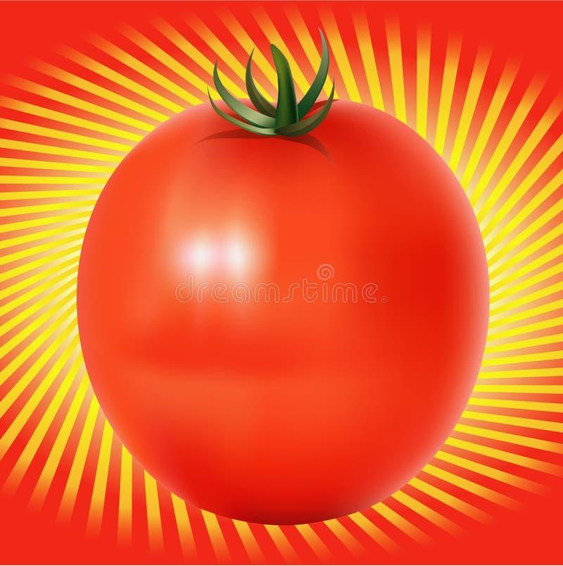 Tomatoe vermelho com linhas fundo ilustração royalty free