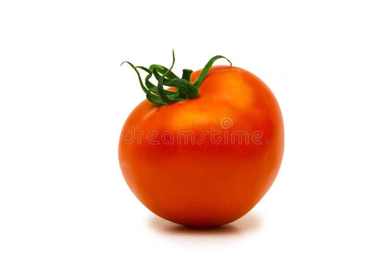 Tomatoe vermelho isolado imagem de stock