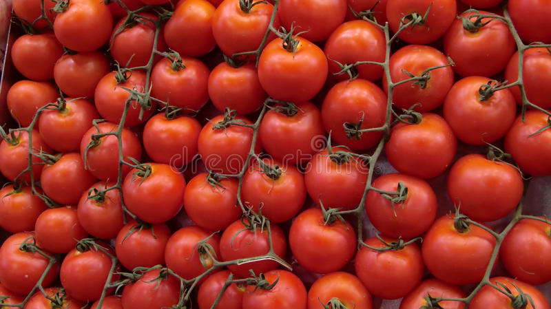 Download Tomatoes stock image. Image of flavor, display, plant - 10112415