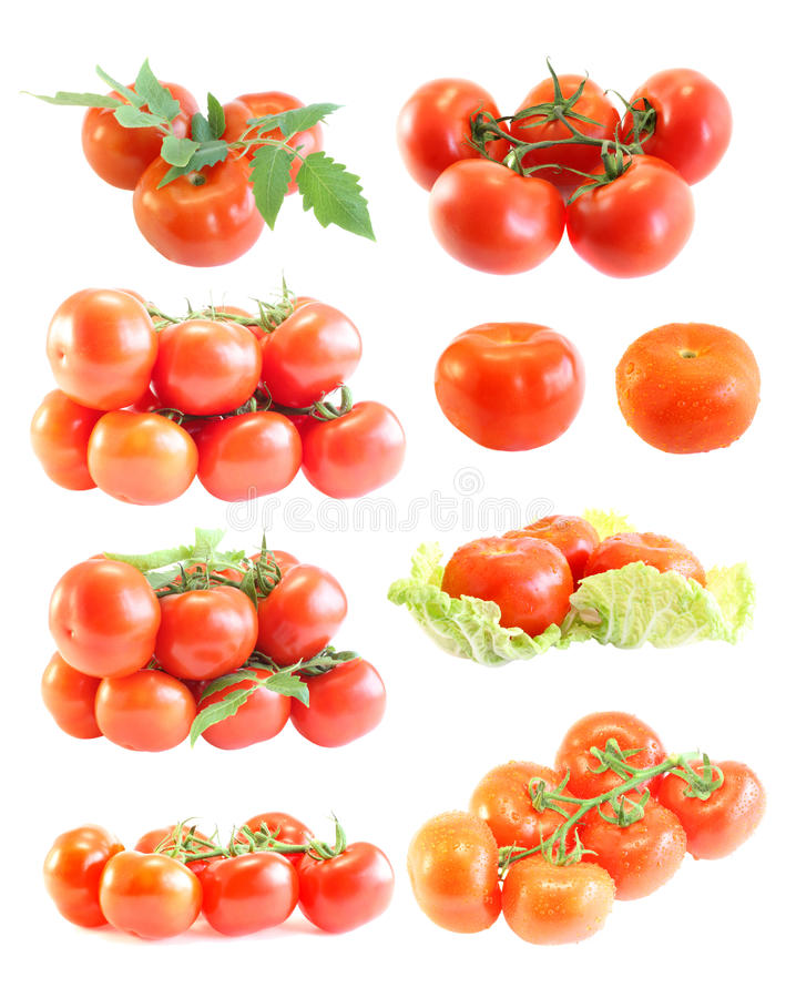 Download Tomatoes stock photo. Image of branch, paste, meal, drops - 10249288