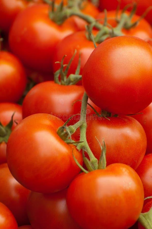 Free Tomatoes Stock Image - 10958171