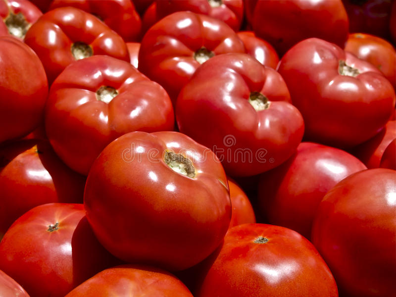 Tomatoes royalty free stock image