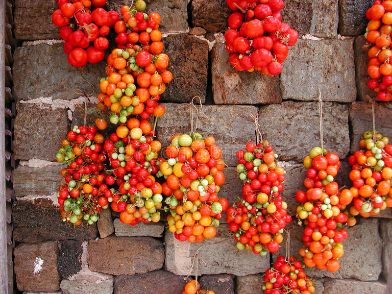Tomatoes. Hung to dry on a wall stock photo