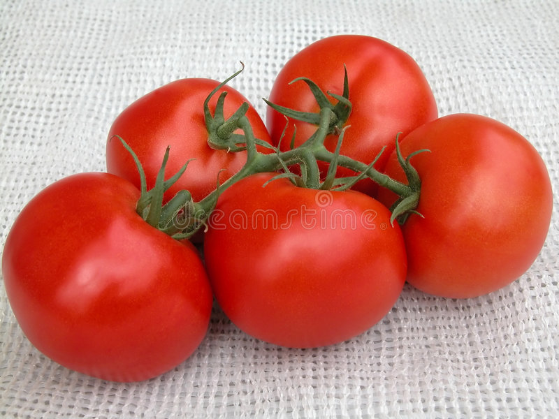 Download Tomatoes stock photo. Image of potherb, vegetable, green - 175170