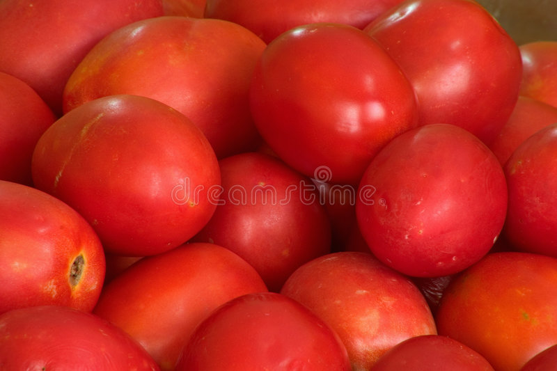 Download Tomatoes stock photo. Image of produce, vegetable, product - 186064
