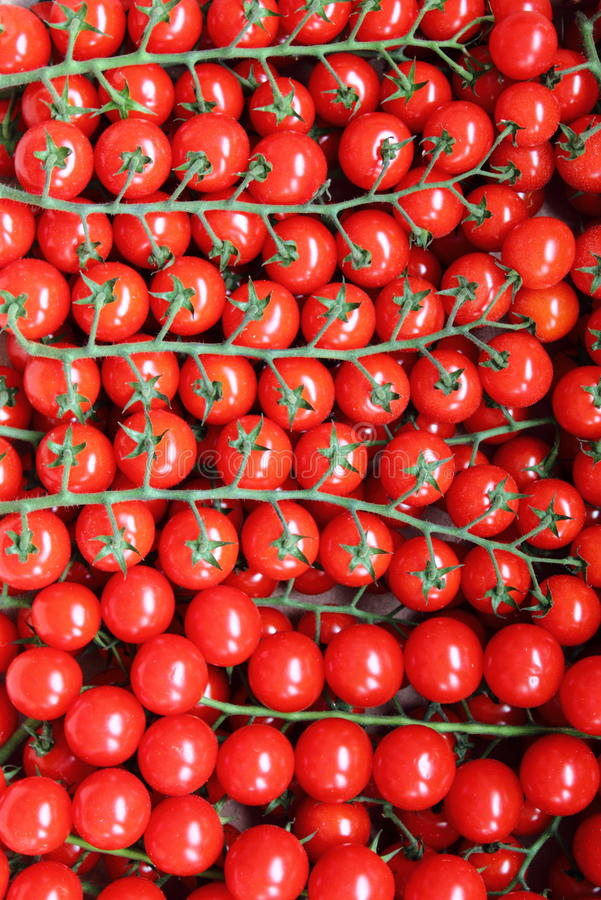 Download Tomatoes stock photo. Image of meal, food, grocer, macro - 20703726