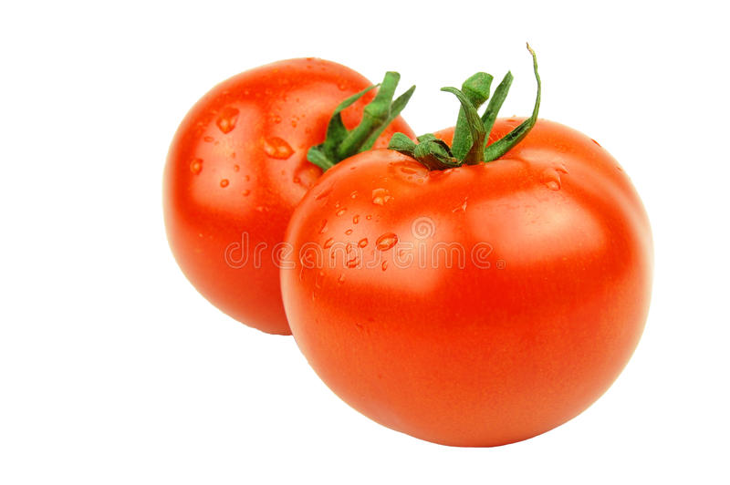 Download Tomatoes stock image. Image of meal, white, tomatoes - 21067129