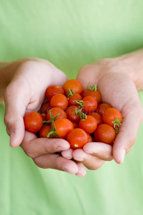 Download Tomatoes stock image. Image of color, home, diet, wallpaper - 21229587