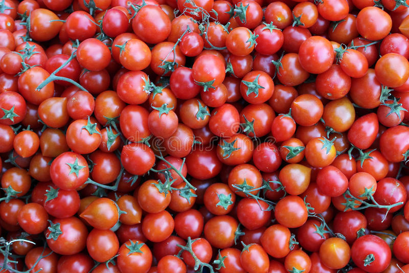 Download Tomatoes Royalty Free Stock Image - Image: 25643746