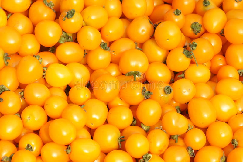 Download Tomatoes Stock Image - Image: 25822321