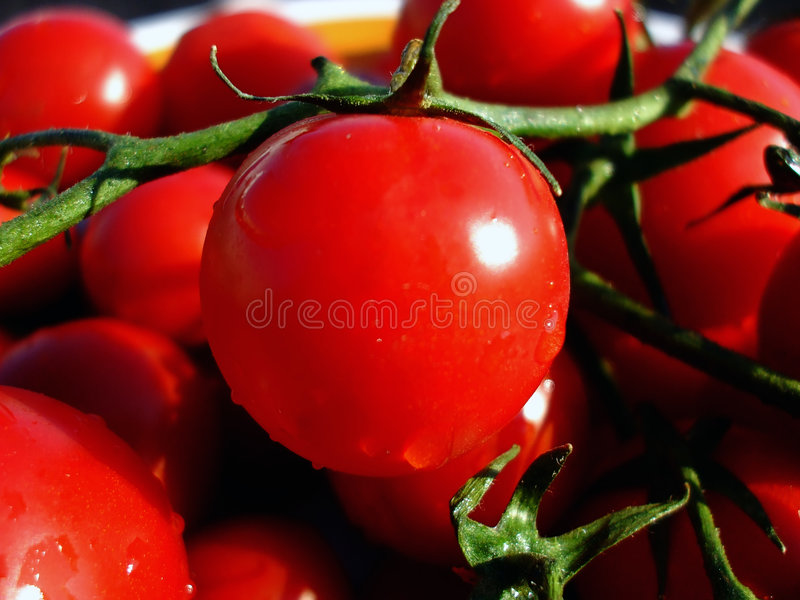 Download Tomatoes stock photo. Image of salad, sauce, closeup, vegetable - 7134148