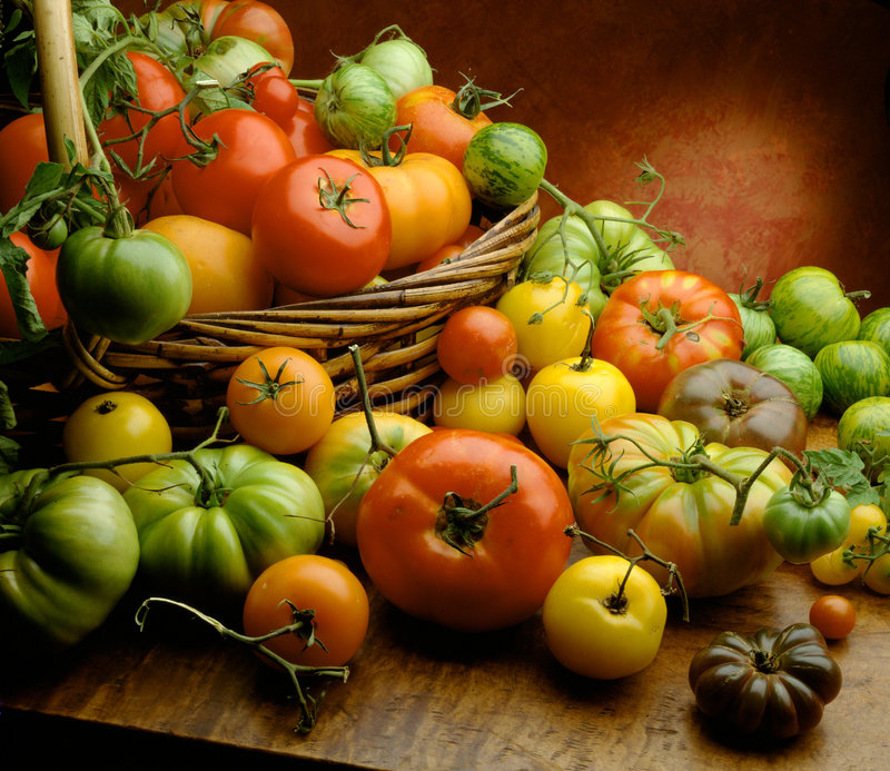 Download Tomatoes stock image. Image of vegetable, wood, still - 8845863