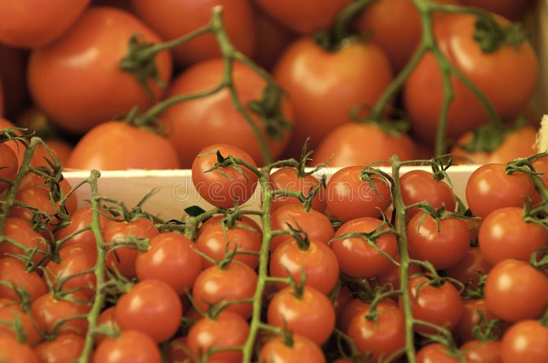 Download Tomatoes stock image. Image of merchandise, shop, freshness - 9483611