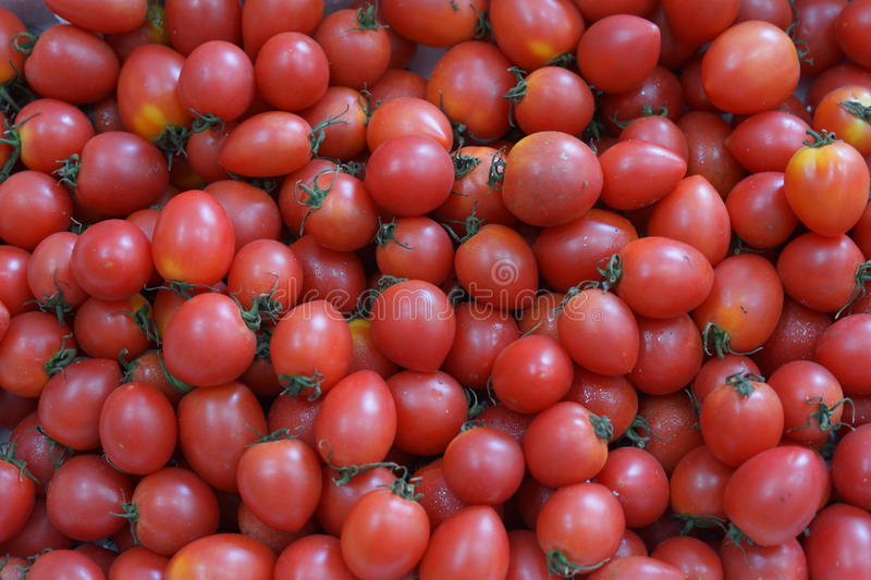 Download Tomatoes stock photo. Image of tomatoes, plants, nutritious - 33793320