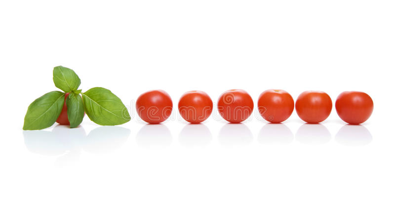 Tomatoes and basil. A row of cherry tomatoes with a sprig of basil isolated on white royalty free stock images
