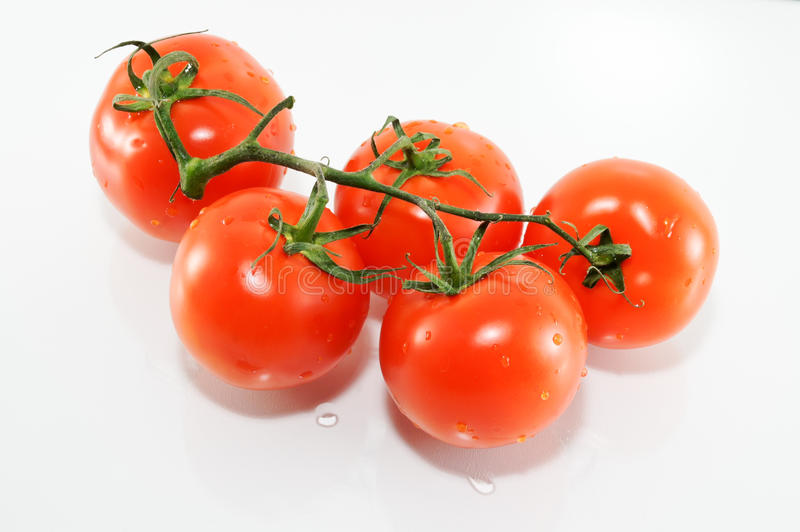 Tomatoes on a branch. Red ripe tomatoes isolated on white royalty free stock photos