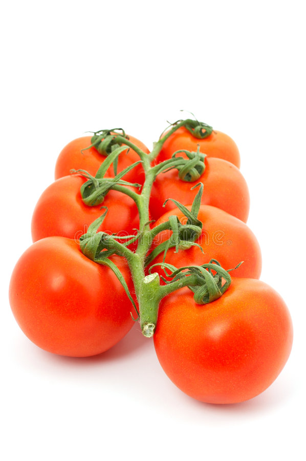 Tomatoes on bunch royalty free stock images