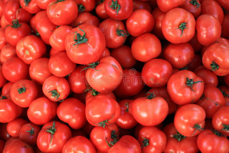 Tomatoes. The delicious, fresh and red colours of tomatoes stock photo