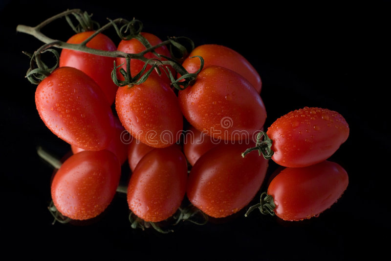 Tomatoes with dew stock photography