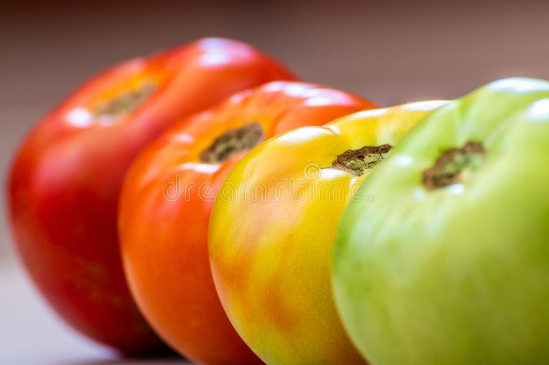 Tomatoes at different ripening stages. Focus is on Turned tomato. Tomatoes at different ripening stages. Concept. Focus is on Turned tomato. Stages are Green royalty free stock images