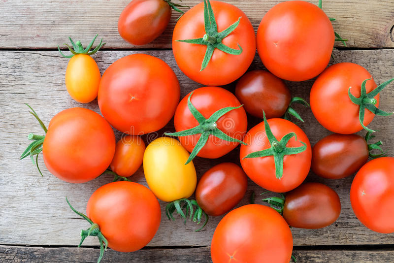 Tomatoes of different varieties stock photography