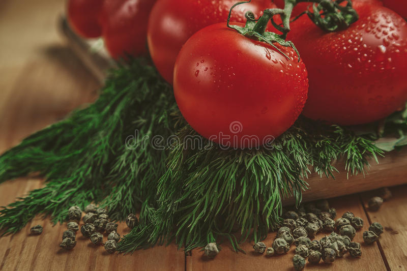 Tomatoes and dill stock photography
