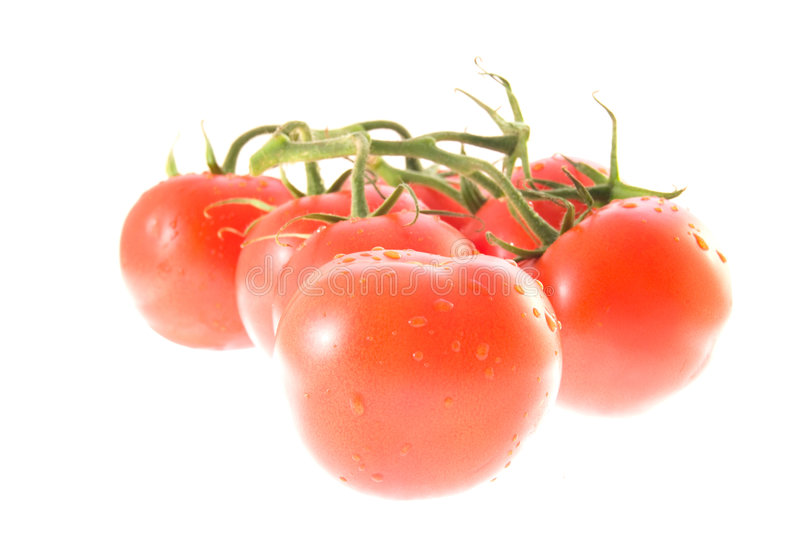 Tomatoes family royalty free stock images