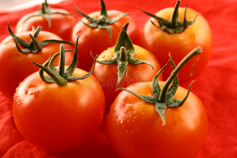 Tomatoes fruit royalty free stock image